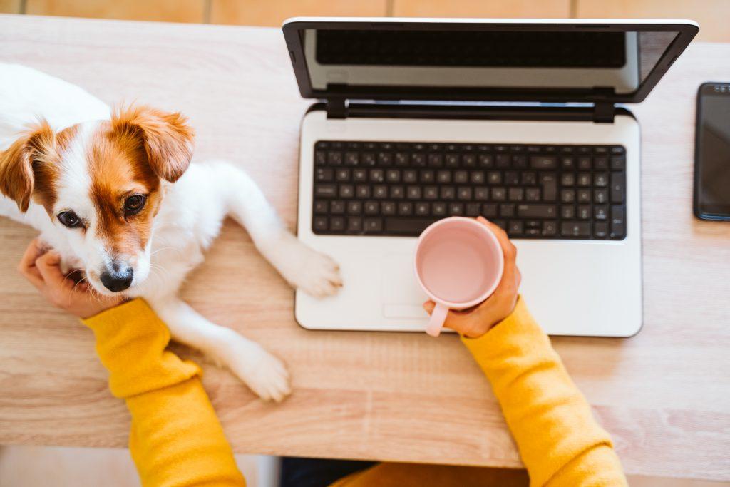 Excel Online Training Veranstaltungstermine